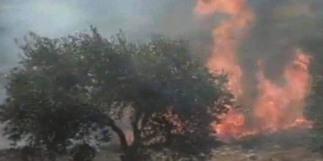 В провинции Хама огонь уничтожил 300 оливковых деревьев