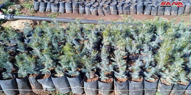 В Сувейде проводится кампания по озеленению