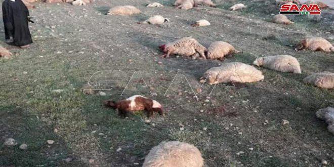 Doğu Salamiyah çobanlarına Terör saldırısında bir vatandaş öldü, 3 kişi yaralandı