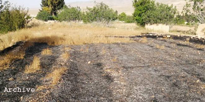 Extinguishing 18 fires that erupted in agricultural lands and forests in Daraa