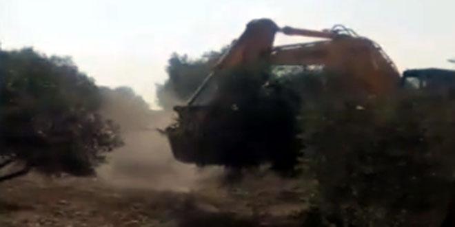 Mercenarios del régimen de Erdogan arrasan con terrenos agrícolas en Afrin