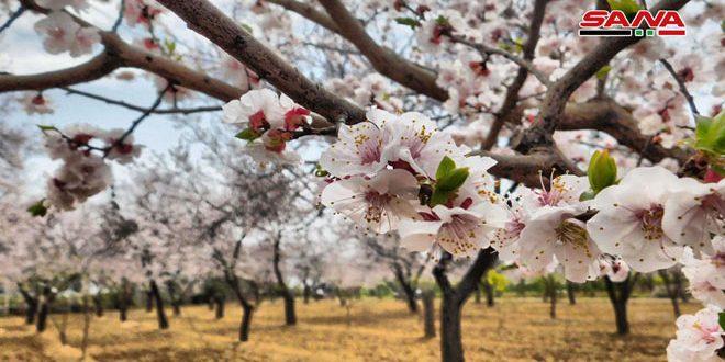 Ghouta Oriental recupera su verdadera primavera