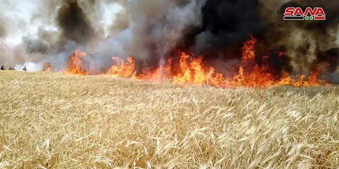 Mueren seis personas mientras extinguían incendios en tierras agrícolas en Hassakeh