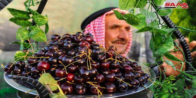 Campesinos exhiben su tesoro en el Festival de Cereza