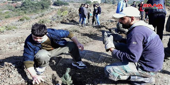 Lanzan campañas de reforestación en Quneitra y Latakia (fotos)
