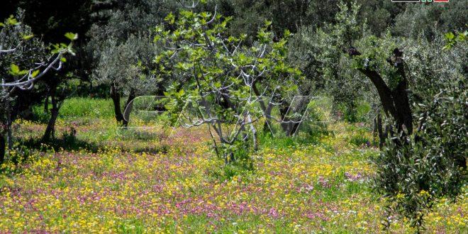 La primavera en Misyaf/Hama