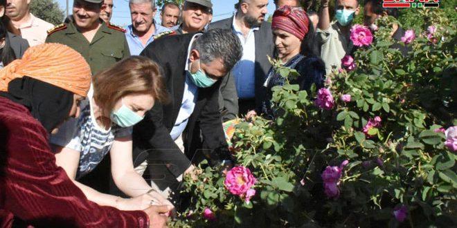 Festival de Cosecha de la Rosa de Damasco en provincia de Hama (+ fotos)