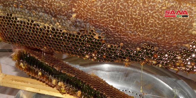Provincia siria produce más de 200 toneladas de miel