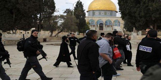 یورش مجدد شهرک نشینان به مسجد الاقصی / بازداشت 3 فلسطینی در کرانه باختری
