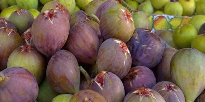 برآورد تولید پیش از 1600 تن انجیر در استان القنیطره