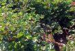 Culture de plus de /4600/ hectares de coton à Hassaké