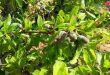 22 מיליון עצי שקדים שמבטיחים תפוקה כלכלית לתושבים בפריפריה חומס המזרחית