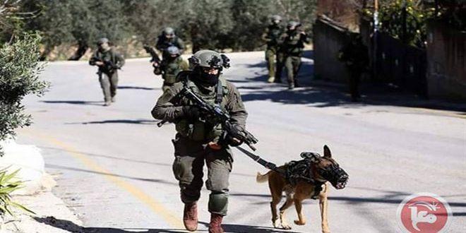 הכוחות הישראליים עצרו 10 פלסטינים בגדה המערבית