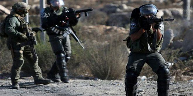 שני פלסטינים נפצעו מירי הכוחות הישראליים צפונית לטול כרם