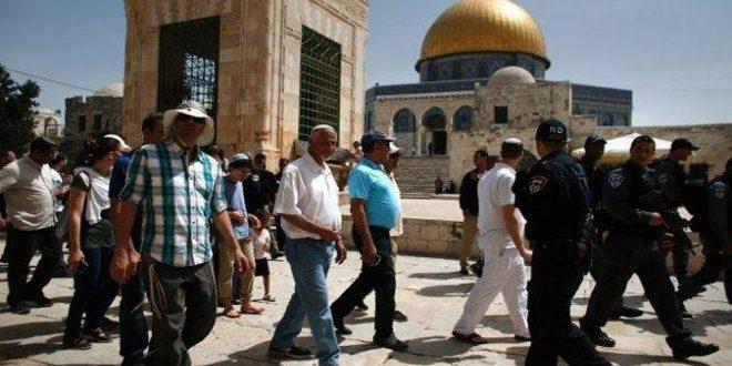 עשרות מתנחלים ישראלים מחדשים פריצתם למסגד אל -אקצא בשמירתם של כוחות הכיבוש