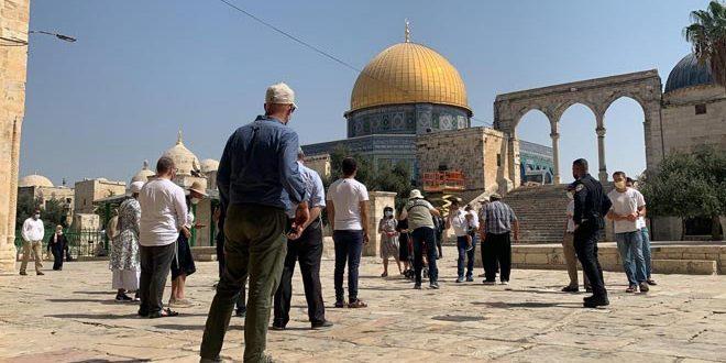 מתנחלים ישראלים מחדשים פריצתם למסגד אלאקצא בשמירתם של כוחות הכיבוש
