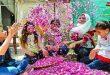 Дамасская роза включена в список нематериального наследия ЮНЕСКО