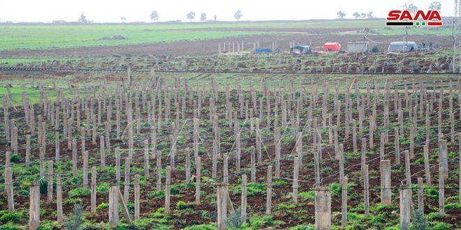 В провинции Дараа намерены восстановить плодовые сады