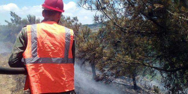 На западе провинции Хомс потушен пожар, охвативший лесные деревья