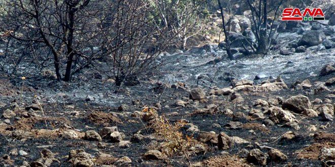 В провинции Сувейда потушен крупный пожар