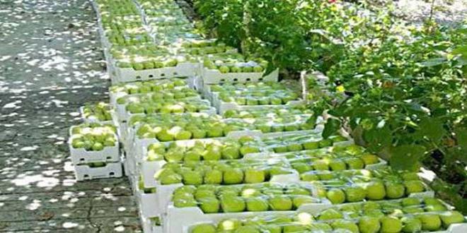 14 Bin Tondan Fazla Elma İhracatı Yapıldı