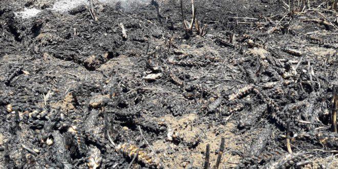 Sivilleri ve Tarım Mahsullerini Bombalamaya Devam Ediyorlar