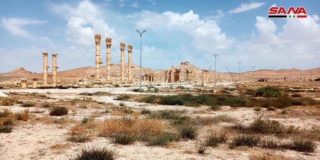 Tedmur'daki Arkeolojik Bölgesinin Aydınlatma Projesinin İkinci Aşaması Tamamlandı