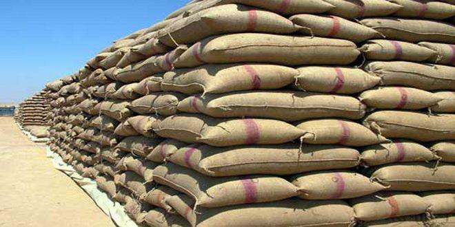تحديد الـ 28 من الشهر الجاري موعدا لتسويق الأقماح في محافظة حماة