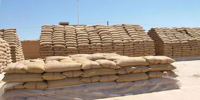 تحويل 163 مليون ليرة لصرف قيم الأقماح المسوقة لفرع مؤسسة الحبوب بدرعا