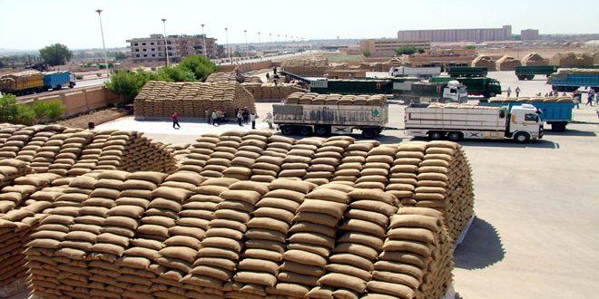 استلام نحو 1500 طن من القمح والشعير في فرعي الحبوب والإكثار بدرعا