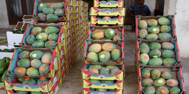 زراعة الفاكهة الاستوائية تنتشر تدريجيا في طرطوس.. جدوى اقتصادية وفرص للاستثمار
