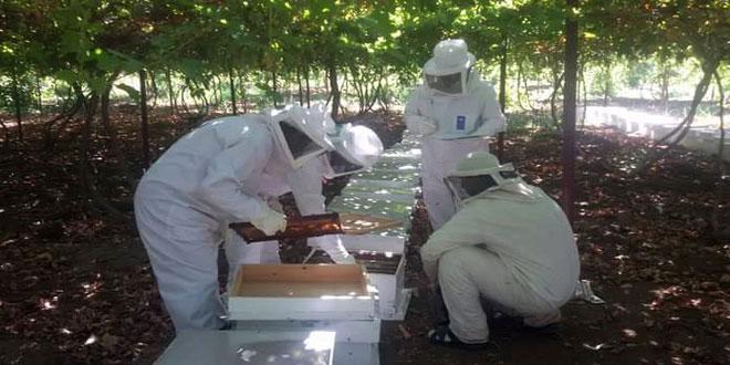 تسهيلات لمربي النحل في حماة