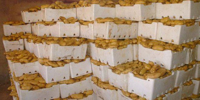 بسعر 330 ليرة للكيلو.. السورية للتجارة تطرح 120 طنا من البطاطا في صالاتها بدمشق