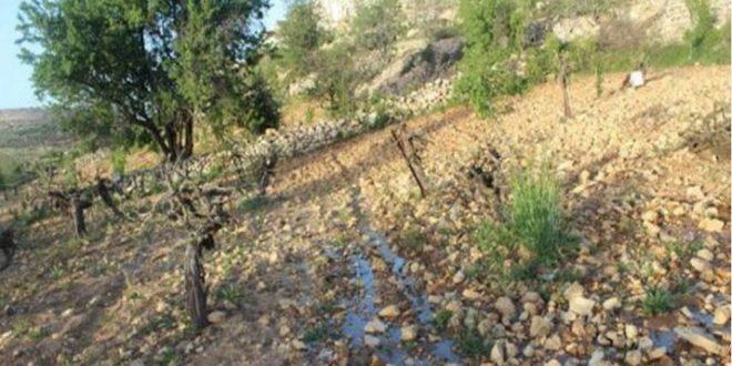 مستوطنون يضخون مياها عادمة إلى أراضي الفلسطينيين بالضفة