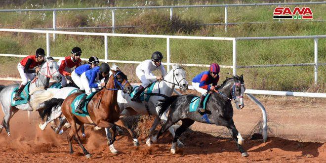 الجمعة سباق السرعة الثالث للخيول العربية الأصيلة