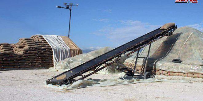 حصاد 481 ألف هكتار من محصولي القمح والشعير بالحسكة