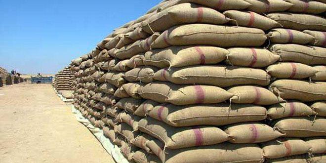 مؤسسة الحبوب: استمرار عملية تسويق القمح في 39 مركزا وتسديد أثمانها للفلاحين