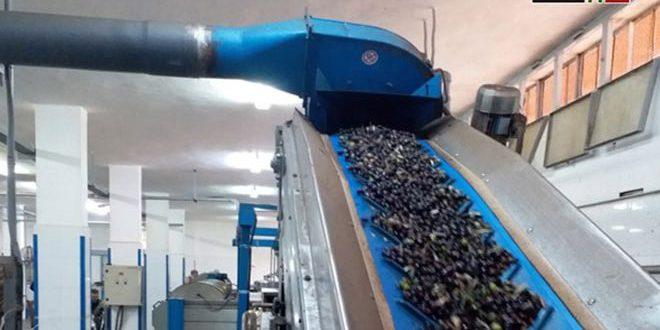 تصدير زيت الزيتون إلى أسواق جديدة