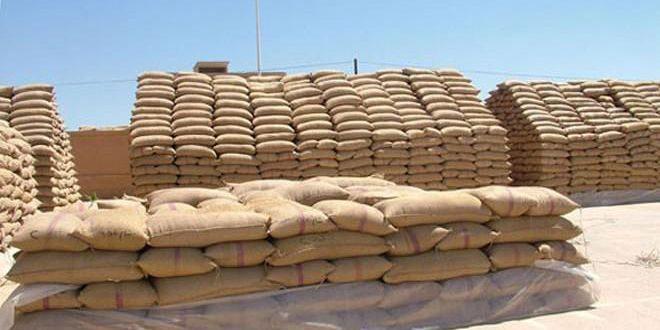 تسليم أكثر من 16 ألف طن من القمح لفرع إكثار البذار بدرعا