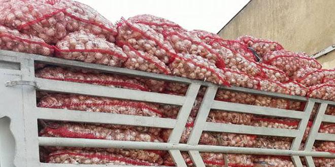 نحو 10 آلاف طن تقديرات إنتاج حماة من البصل