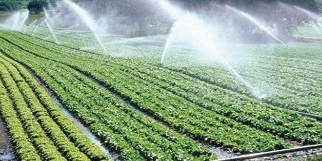 بعد توقفها لسنوات… عودة قروض تمويل شبكات الري الحديث للمزارعين في اللاذقية