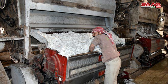 5500 طن كميات الأقطان المحلوجة في محلج الفداء بحماة