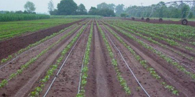 تحسن الغطاء النباتي ونمو المراعي الطبيعية في بادية الحسكة