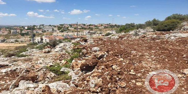 مستوطنون إسرائيليون يقتلعون مئات أشجار الزيتون في سلفيت