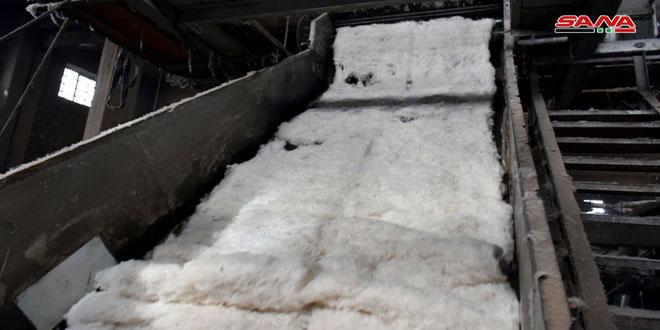 حلج 12500 طن من الأقطان في محلج الوليد بحمص