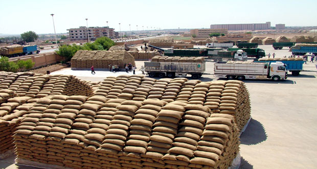 اعتماد ثلاثة مواقع لاستلام محصول القمح من المزارعين بالسويداء