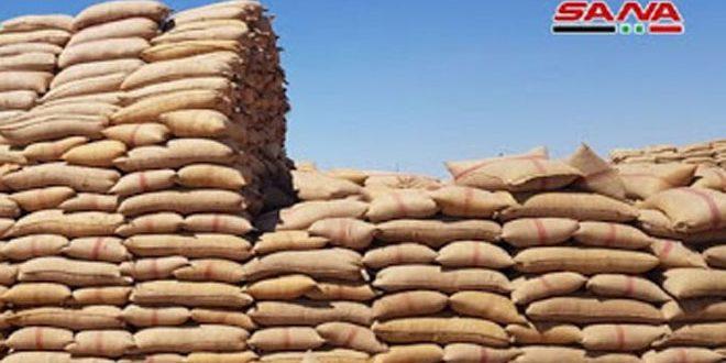 تزويد السورية للحبوب في الحسكة بـ500 ألف كيس لزوم تسويق القمح