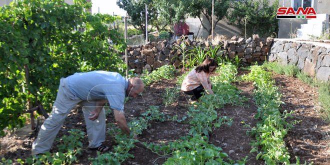 استثمار كل شبر من الأرض للزراعة وتربية الثروة الحيوانية.. تجربة أسرة ريفية بالسويداء