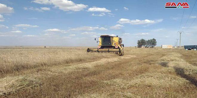 حصاد أكثر من 170 ألف دونم مزروعة بالشعير في السويداء