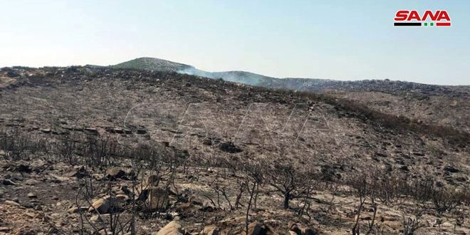 الزراعة: مساحة حرائق الغابات في مصياف والغاب أكثر من 3 آلاف هكتار